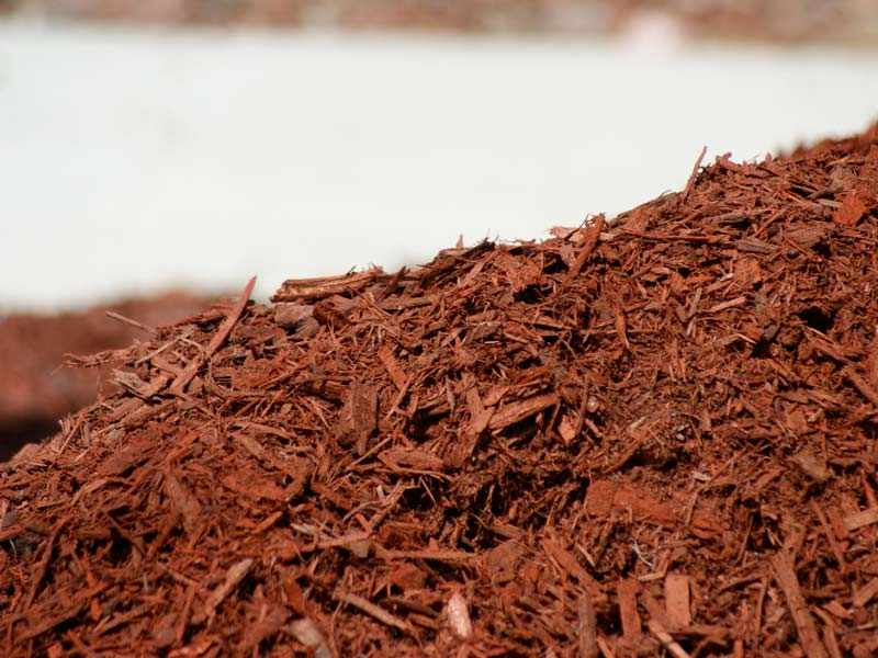 5 Amazing Facts About Mulch You Didn't Know